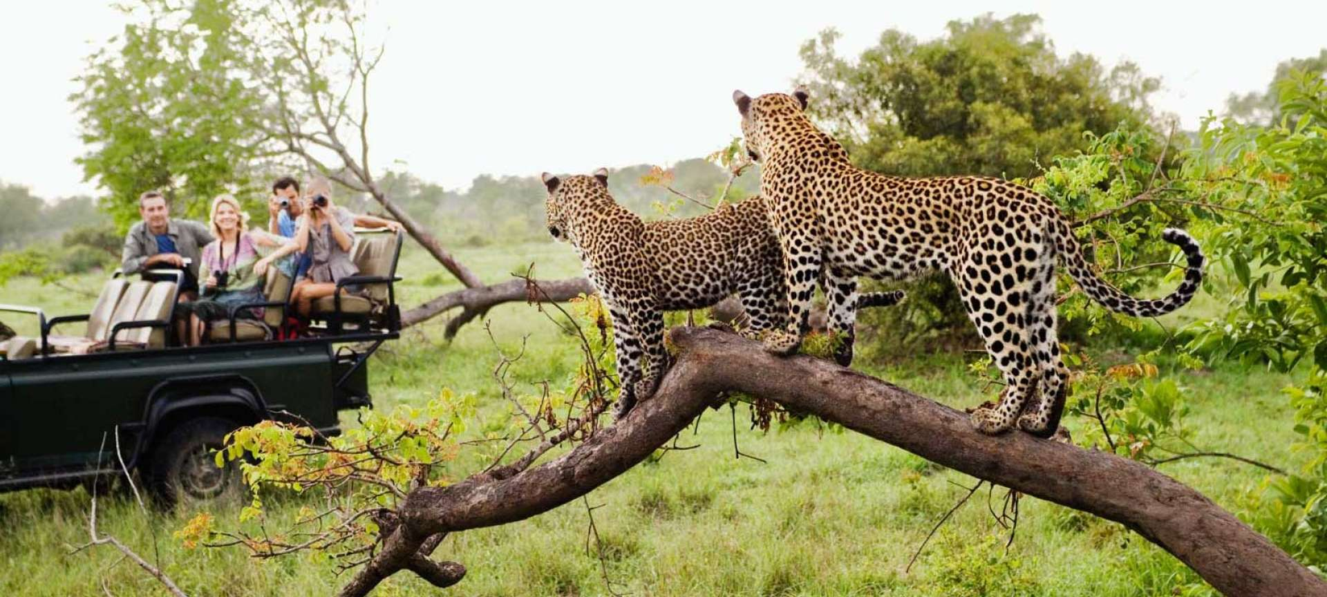 Private Game Reserves in the Greater Kruger National Park ...